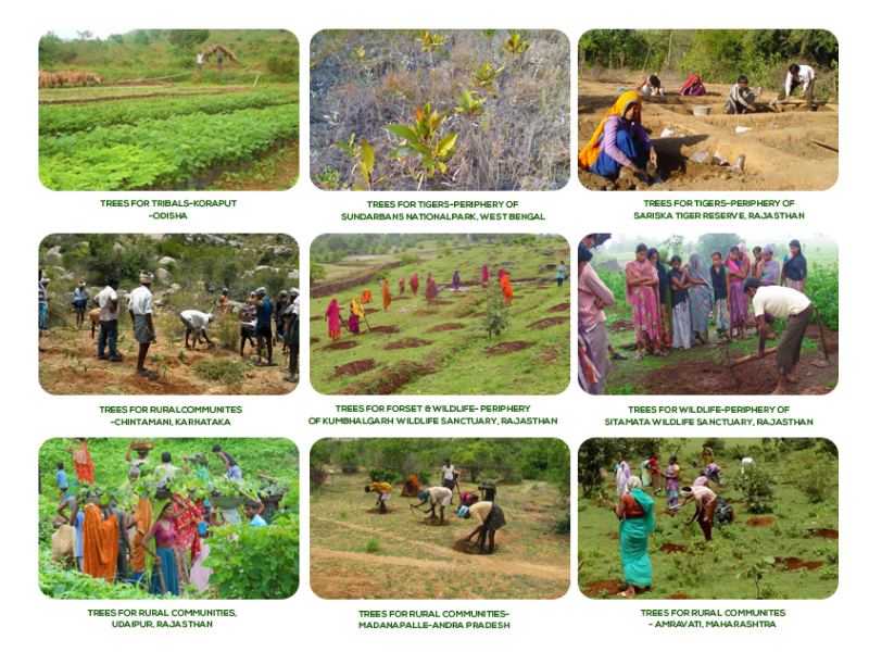 Companies and individuals together planted over 3.5 million trees!